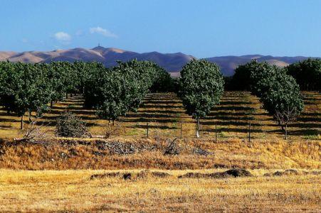 California-Mendota-odling2