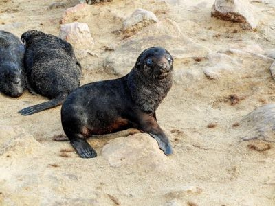 The Cape Cross seal reserve, on the Namibian Atlantic coast.