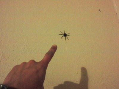 For example, this spider sat on the wall above my bed.