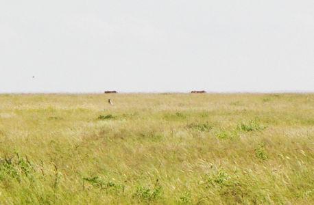Namibia-92