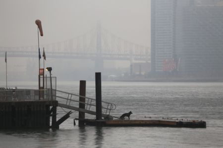 east-river-dog