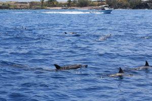 Hawaii-bigisland-whale-12
