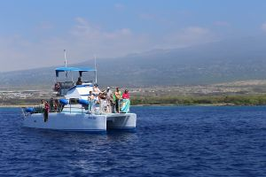 Hawaii-bigisland-whale-17