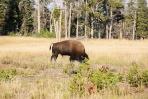 yellowstone2-aug2015-12