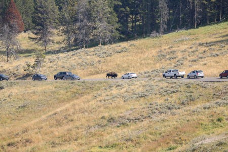 yellowstone2-aug2015-4