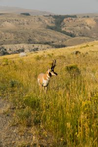 yellowstone3-aug2015-26